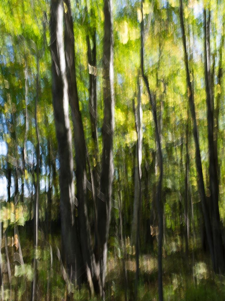 early_fall_foliage