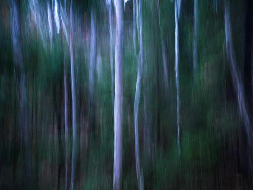 forest_spirits