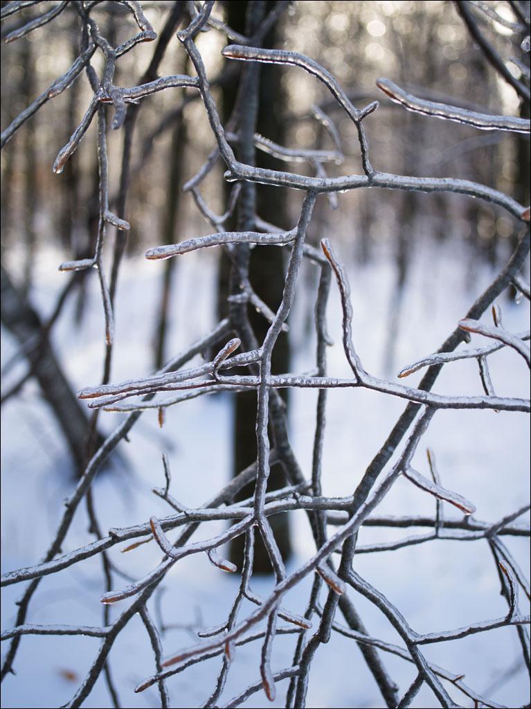 ice_storm_6