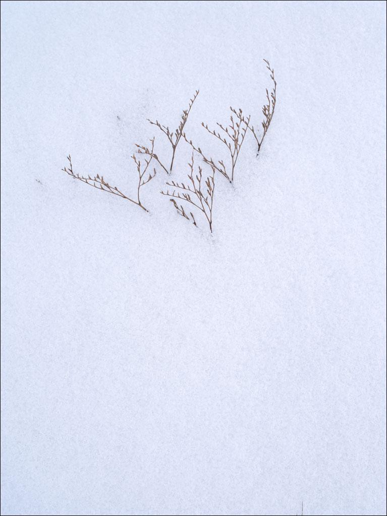 morse_mountain_winter_marsh