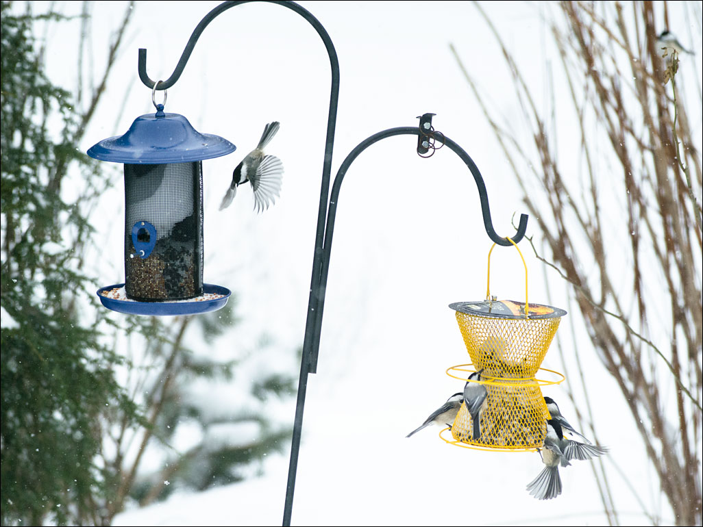 life_in_maine_bird_feeder2