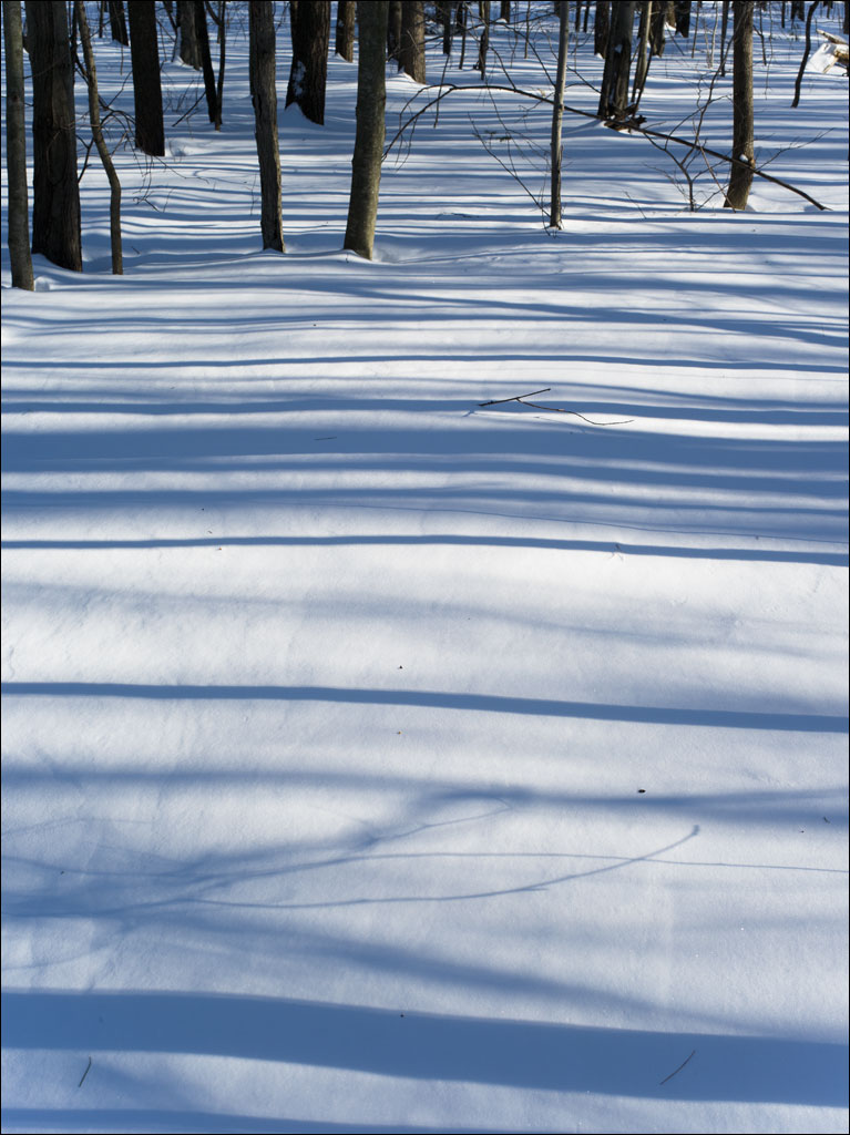 life_in_maine_winter_forest2