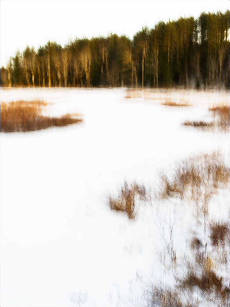 life_in_maine_winter_marsh