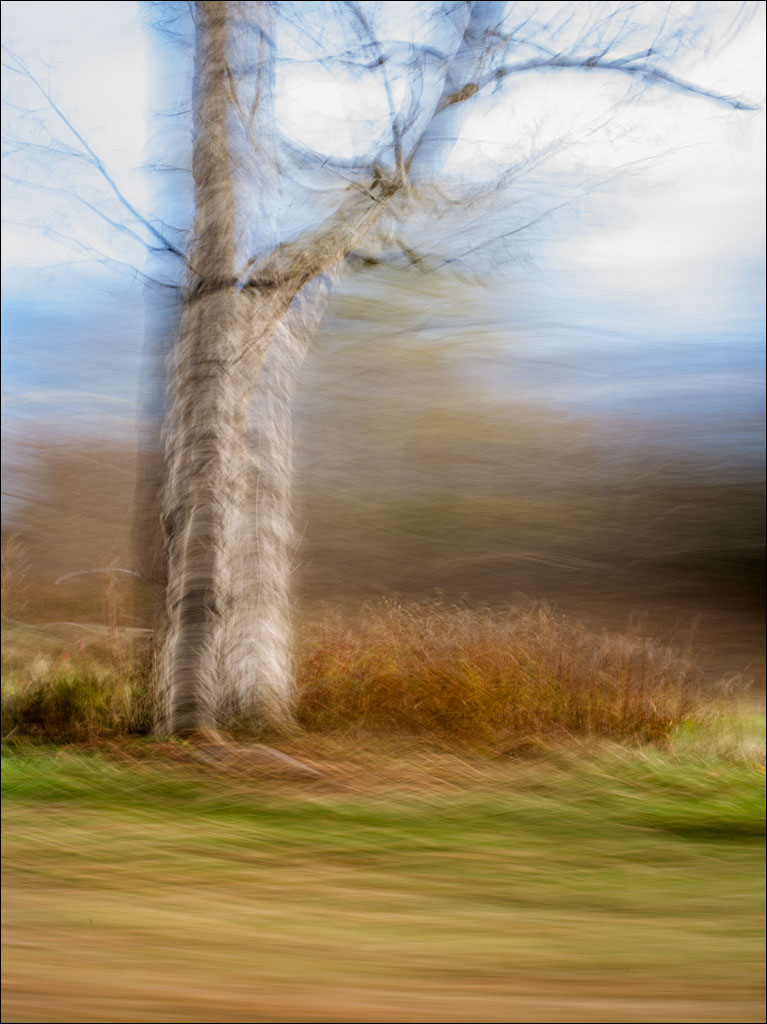life_in_me_tree_pasture