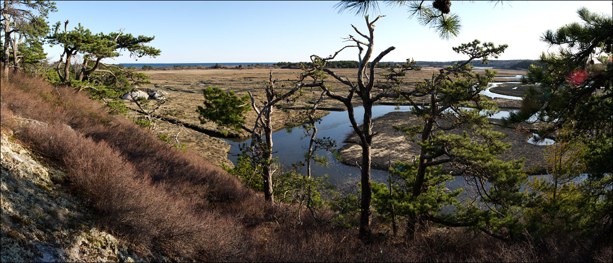 morse_mountain_spring_marsh
