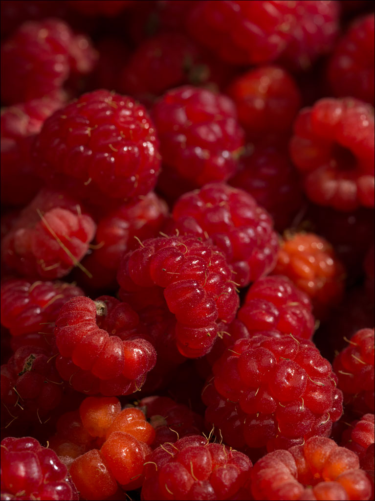 life_in_maine_raspberries_1