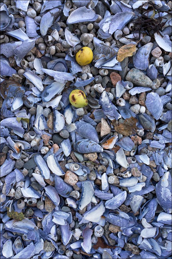 acadia_autumn_beach