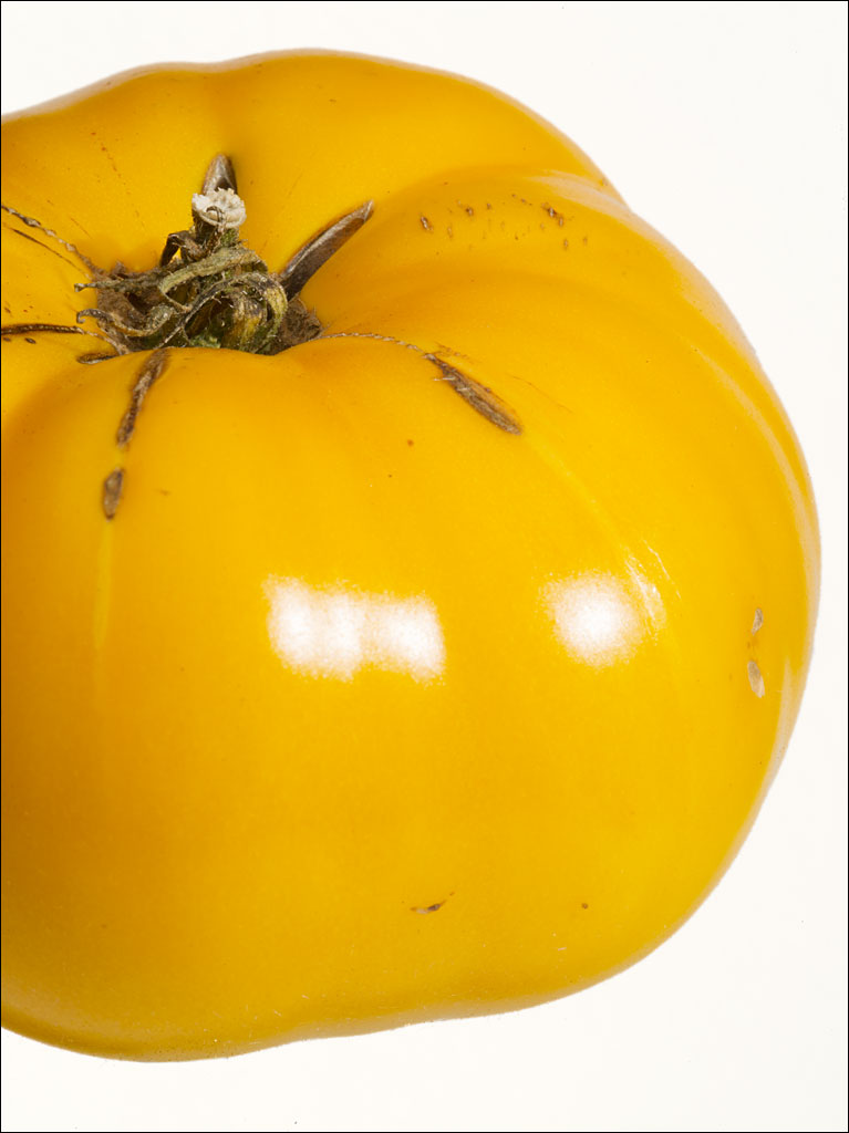tomatoes_yellow_brandywine