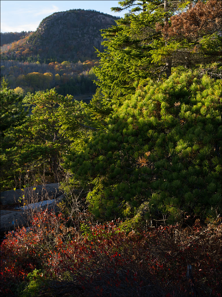 acadia_coastal_forest