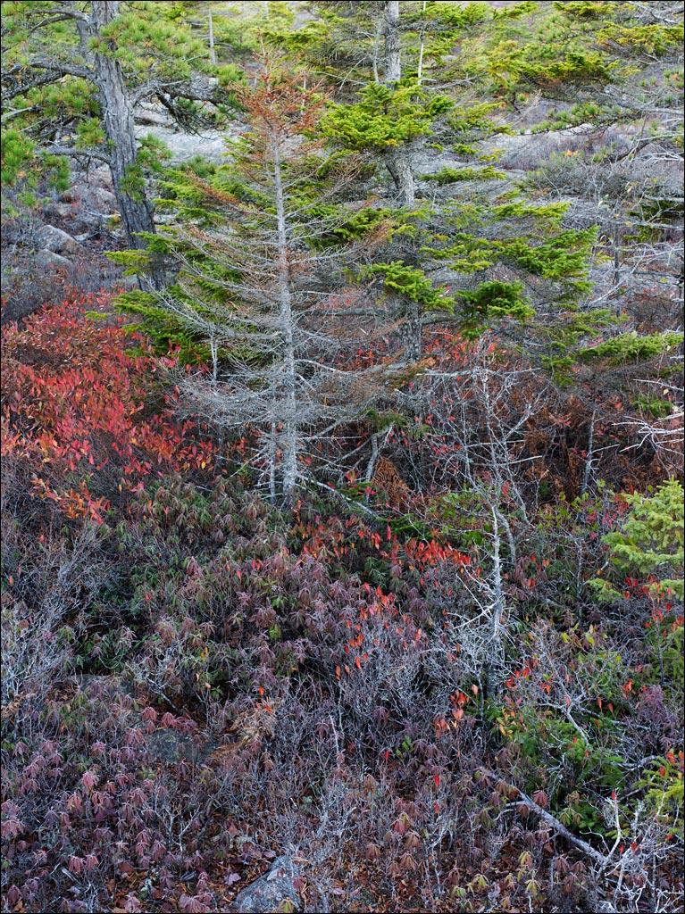 acadia_coastal_forest_2