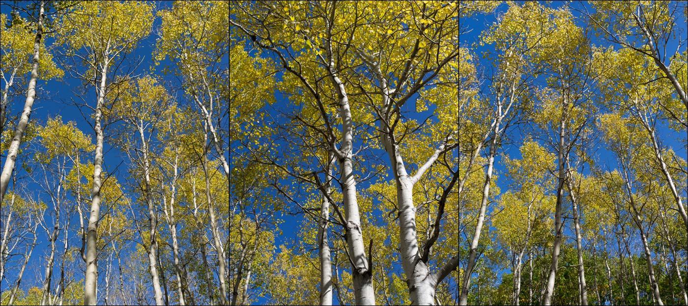 acadia_season_of_color