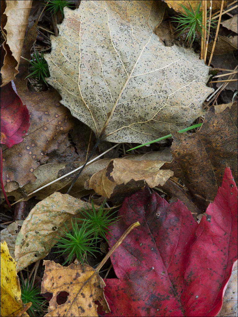 life_in_maine_leaf_litter