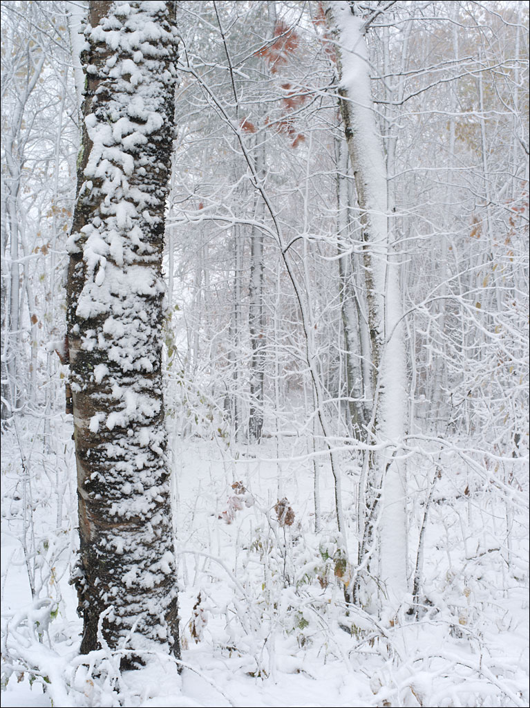 our_forest_first_snow_1