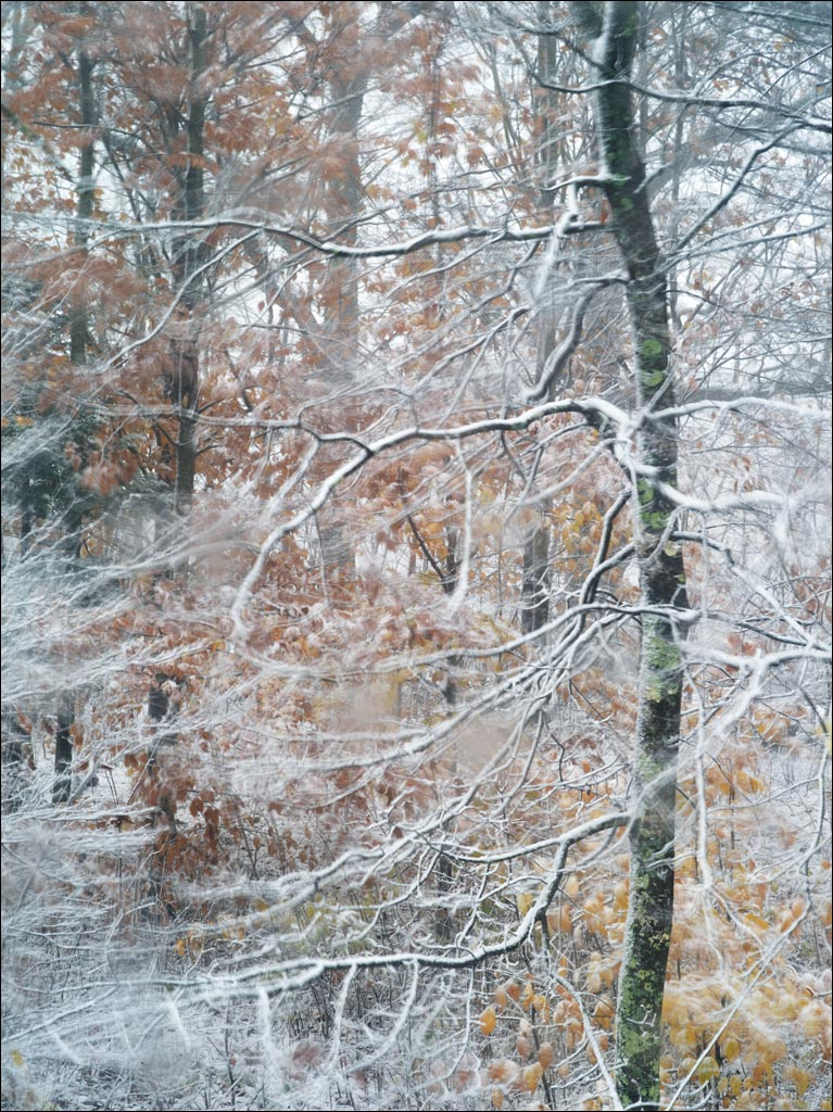 our_forest_first_snow_2