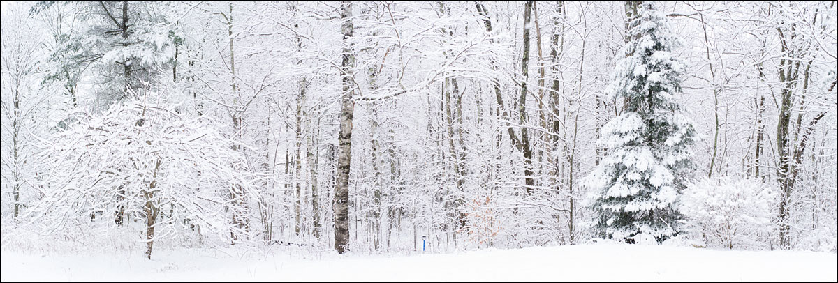 life_in_maine_our_forest_in_winter_pano