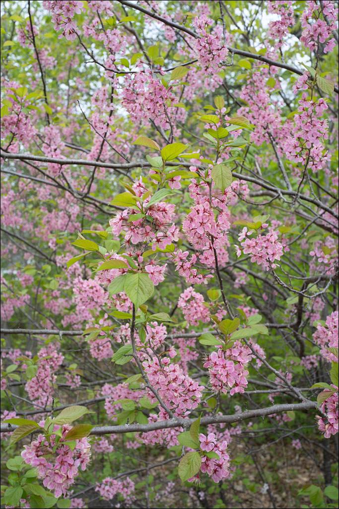 life_in_maine_spring_arrives_2