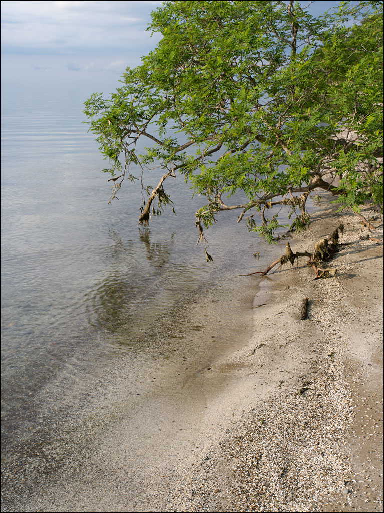 travels_shore_of_lake_erie