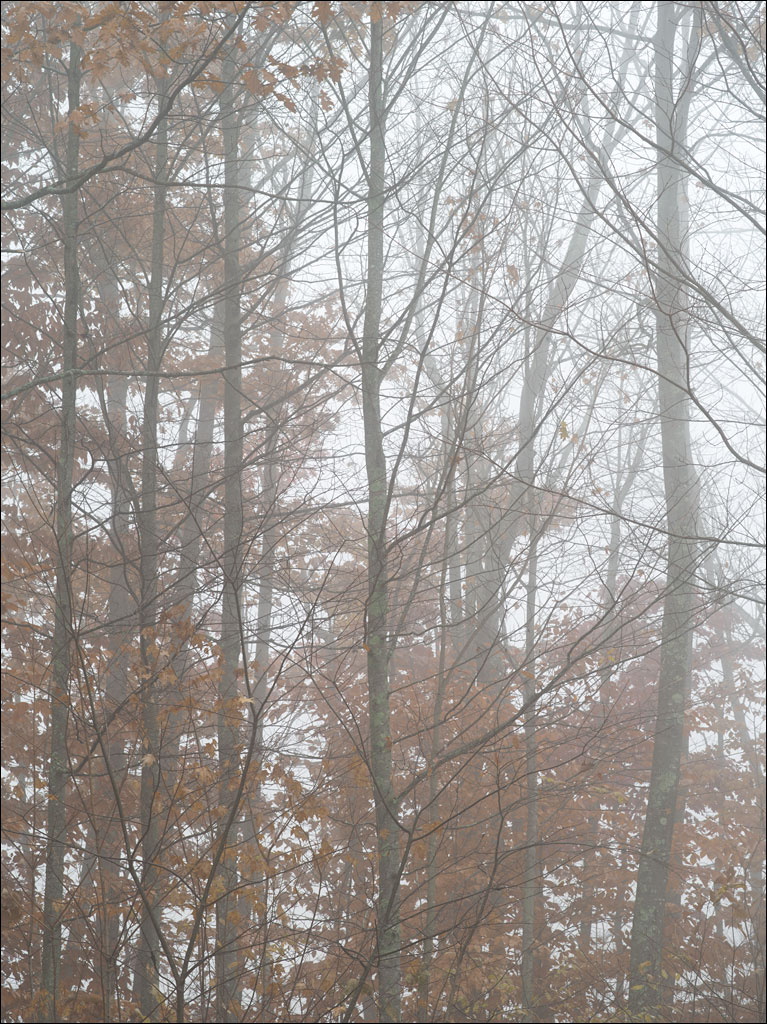life_in_maine_foggy_morning