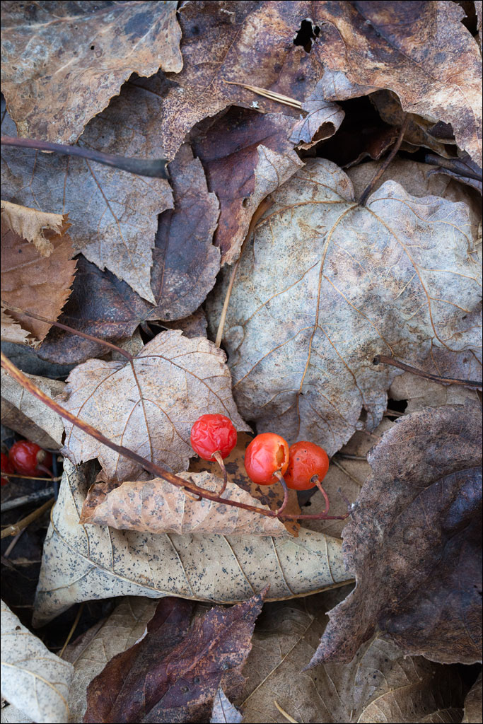 life_in_maine_forest_floor