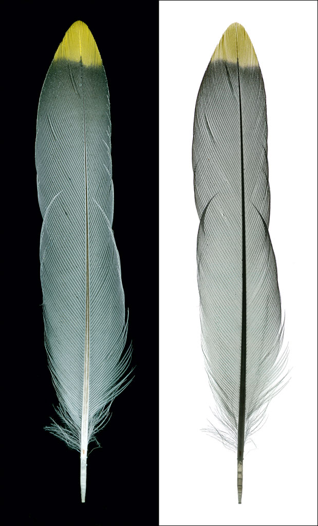 life_in_maine_feather