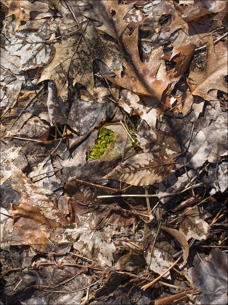 life_in_maine_forest_floor_3