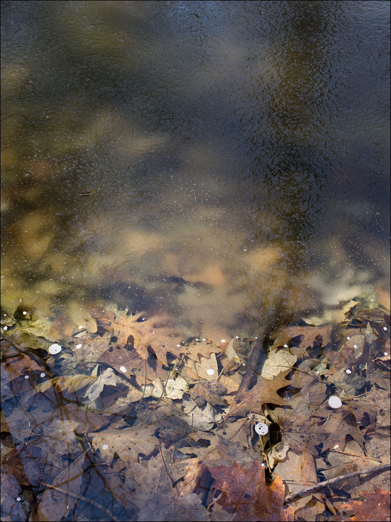 life_in_maine_vernal_pool