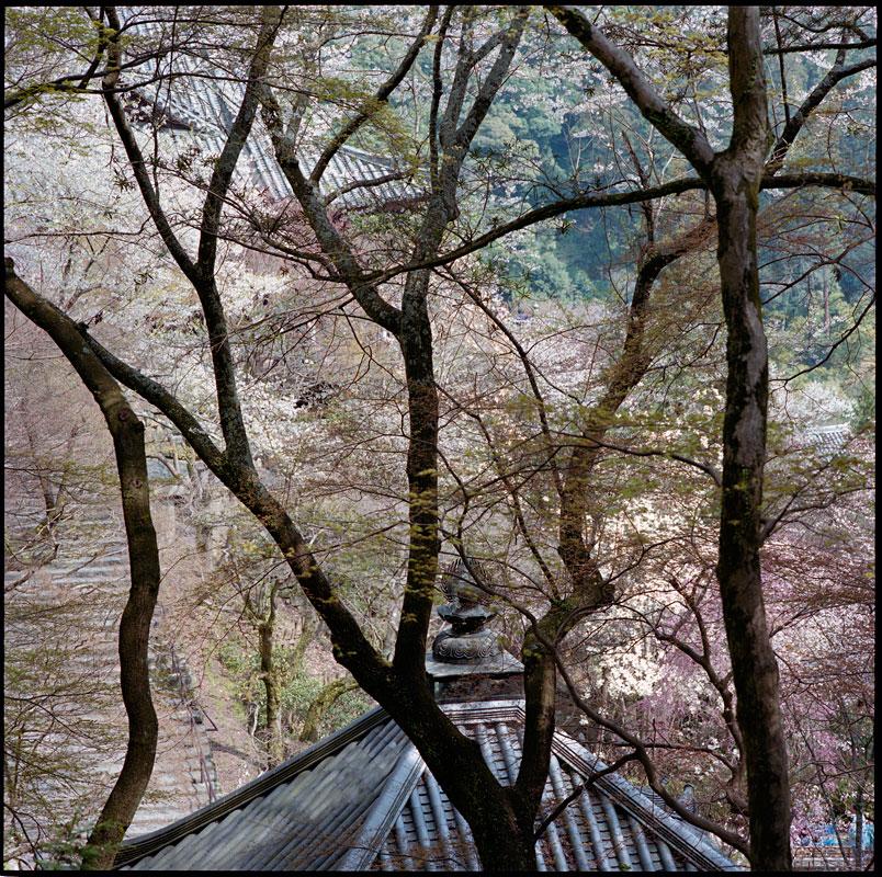 japan_hase_dera