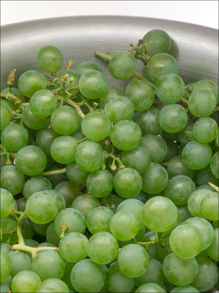 life_in_maine_grape_harvest_sept