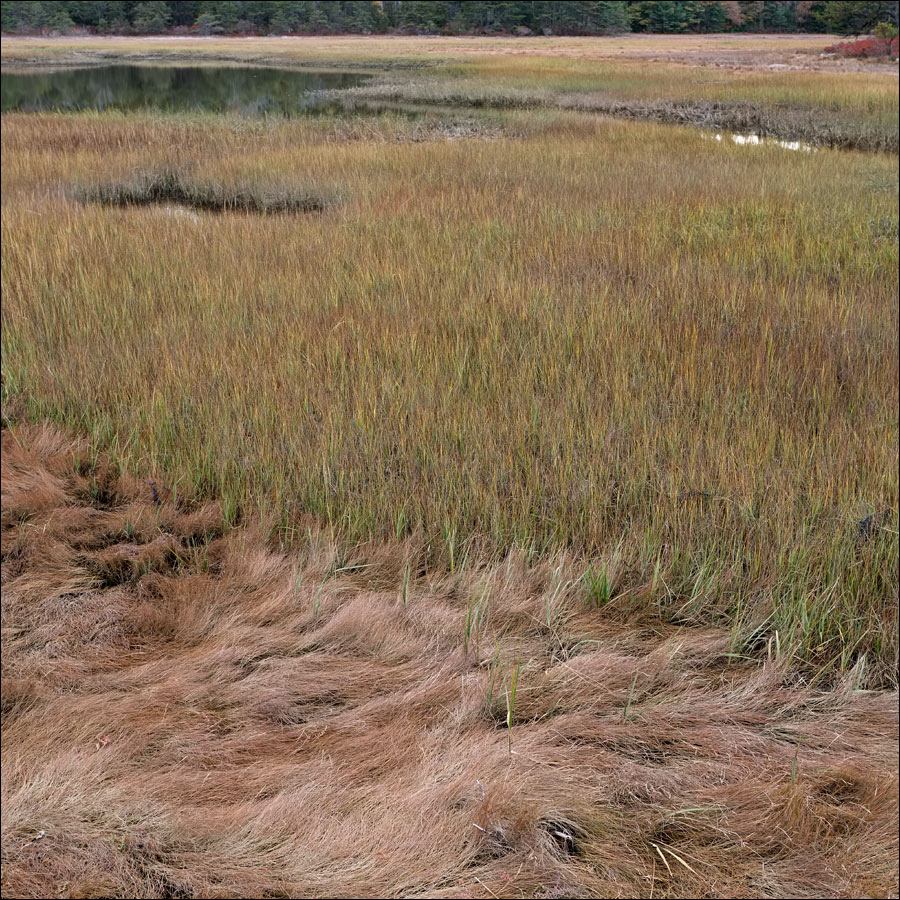 life_in_salt_marsh_2